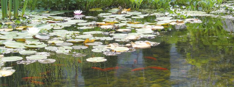 Vijvers staal tuinaanleg for Como oxigenar un estanque de peces